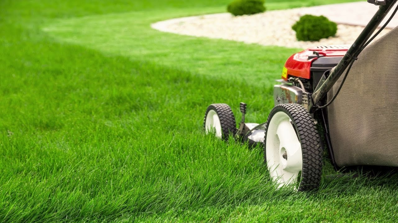 Lawn mower mowing green grass